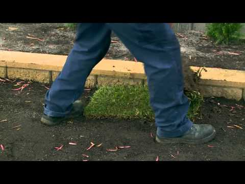 How To Lay Instant Turf - DIY At Bunnings