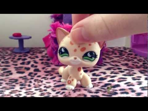Littlest pet shop: The Diabetes dilemma (Part 1)