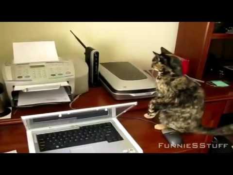 gatti e stampanti in guerra
