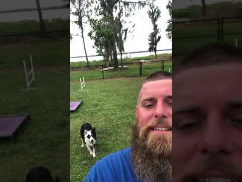 Selfie training – Fiksu koira!