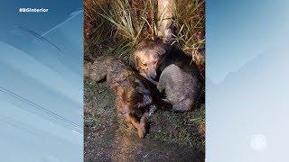 Sorocaba: cães salvos durante temporal se recuperam