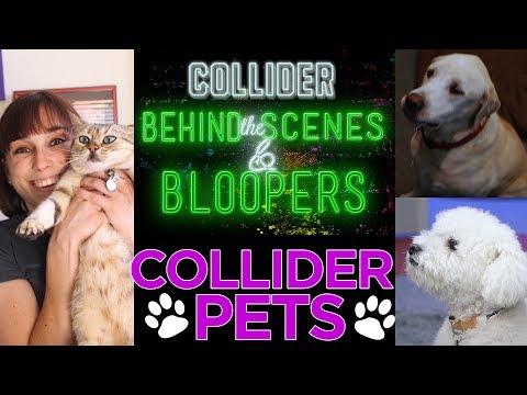 Collider Pets - Collider Behind the Scenes & Bloopers