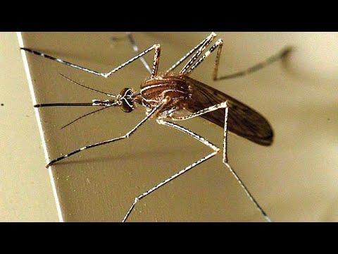 Ρουμανία – Ιταλία: Φονικά κουνούπια