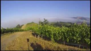 Ferrari-Carano Time Lapse Video - A Year in the Vineyard