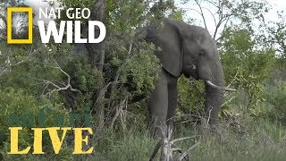 WATCH NOW: Safari Live | Nat Geo WILD by Nat Geo WILD
