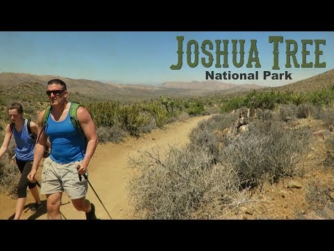 5 Key Stops/1 Day - Joshua Tree National Park