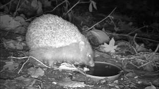 Wildlife Trail Camera - 21.11.2016