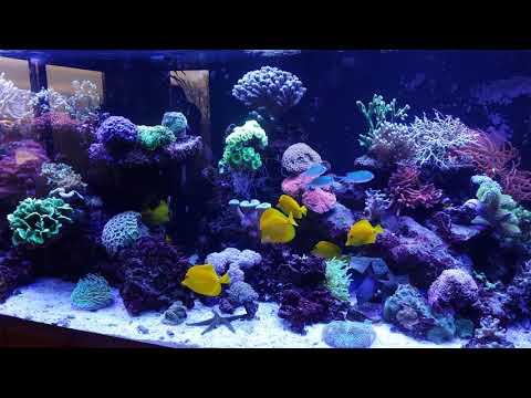 Aquarium based fully on Aquaforest products_Akvárium