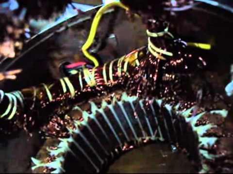 Scrapping Industrial Electric Motor