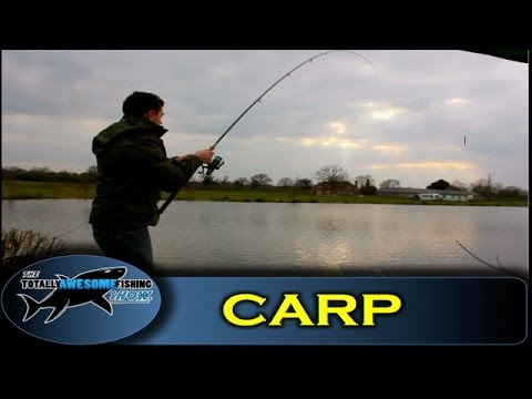 How to catch Carp with Prawns – The Totally Awesome Fishing Show