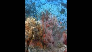 Underwater Live Wallpapers YouTube video