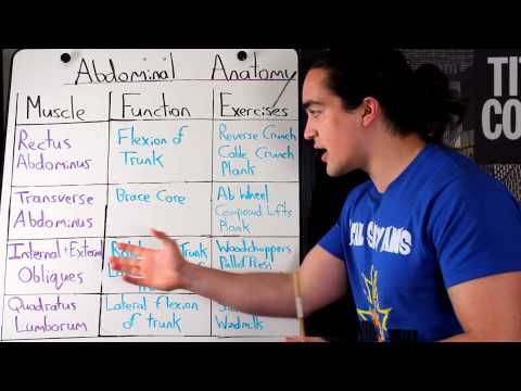 ABDOMINAL ANATOMY 101: HOW TO TARGET THEM + THEIR FUNCTION
