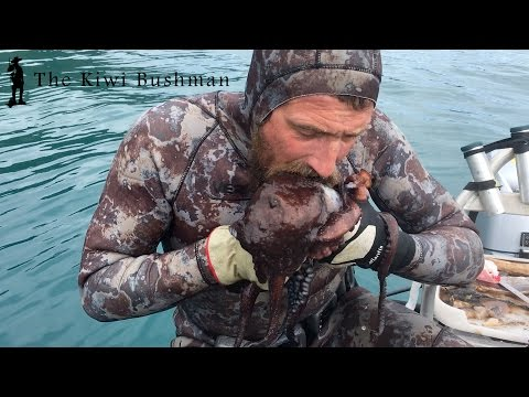 How to kill an octopus kiwi style