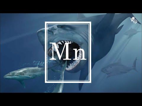 reactions - Subscribe! http://bit.ly/ACSReactions Best-selling author Sam Kean stops by Reactions this week to debunk the myth of the Megalodon, the 50-foot super shark that, despite what
