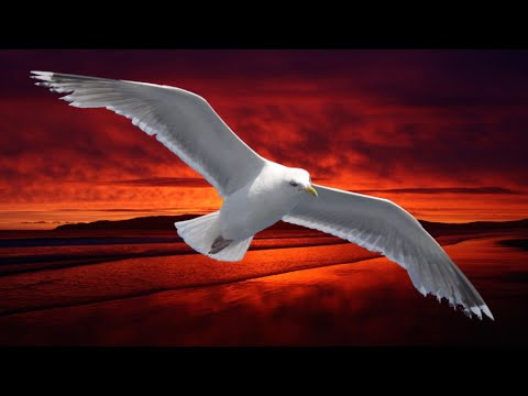 NEIL DIAMOND ~ SKYBIRD/LONELY LOOKING SKY/THE ODYSSEY