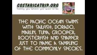 More here: http://costaricatrip.org/fishing-tours/los-suenos-costa-rica-fishing-charters/ Los Suenos Costa Rica Best Fishing...