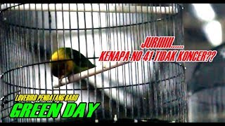 Video Lovebird Mewah Yang Terabaikan Di Piala Presiden Jokowi 2018 MP3, 3GP, MP4, WEBM, AVI, FLV Juni 2018