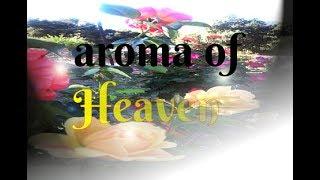 Nonton Aroma Of Heaven Tonight Film Subtitle Indonesia Streaming Movie Download