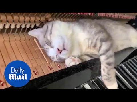 Τίποτα δεν μπορεί να ξυπνήσει αυτή τη γάτα!