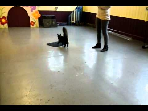 Cat training – video diary 2
