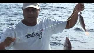 Video Barco Garoto pesca de cherne e pargo em Cabo Frio - TEL 22 98946622 LÚCIO MP3, 3GP, MP4, WEBM, AVI, FLV Desember 2017
