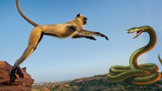 Video Monkey Snake & Mouse - Real Fight | Full Video From My Phone MP3, 3GP, MP4, WEBM, AVI, FLV Maret 2018