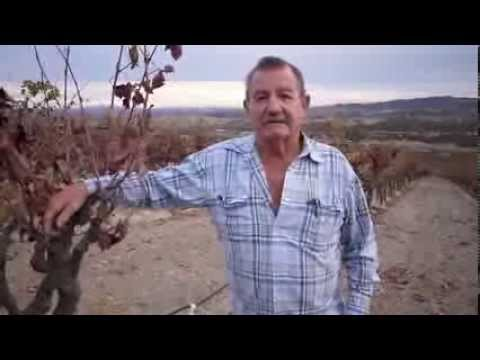 Richard Sauret Vinyards