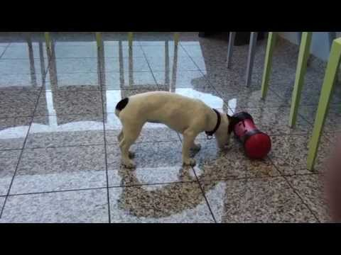 Pipolino Anti-Stress home trainer gioco per cani