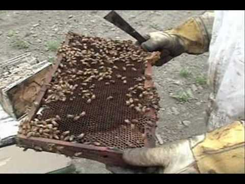 Honey Pacifica: The Beekeeper's Life, The Raw Unheated Honey Process