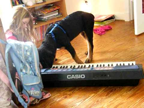 Calypso Playing Keyboard