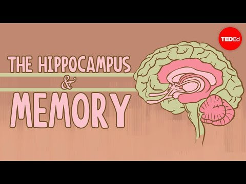 What happens when you remove the hippocampus