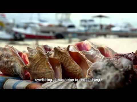 Diving into the Mesoamerican Reef Leadership Program