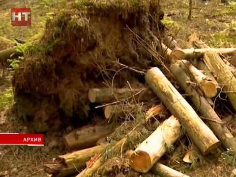 Проблемами лесопользования серьезно занимаются сейчас активисты Народного фронта