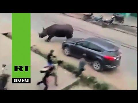 Salvaje rinoceronte mata a mujer en Nepal