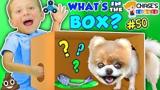 Chase's Corner: What's in the Box Challenge w/ Little Bear the Pomeranian Puppy (#50) | DOH MUCH FUN