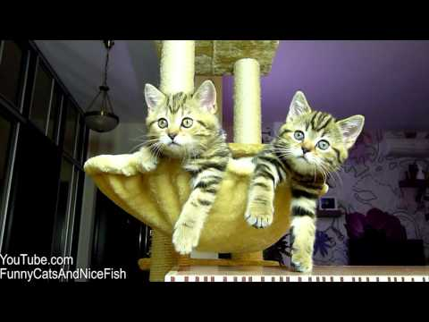 funny cats watching women's tennis