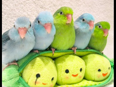 5 peas is a pod: Cuteness level over 9000