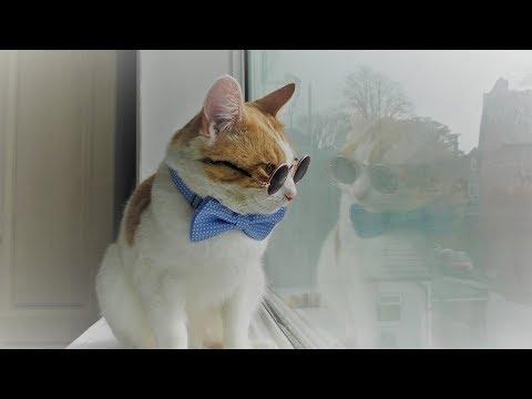 Mimi The Cat Models Bow Tie & Glasses - 4K Ultra Hd 2160p (видео)