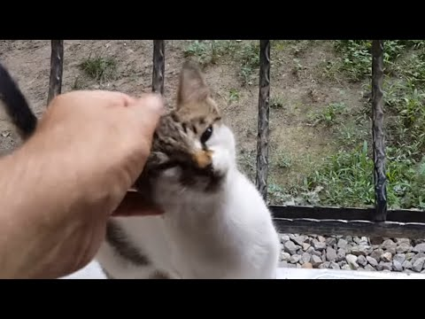 How To Pat A Istanbul Kitten. - Travelling Turkey