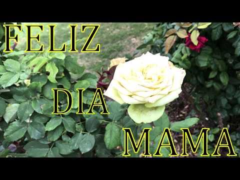 . FELIZ DÍA DE LA MADRE 2019 // Frases lindas para MAMÁ // Felicidades 10-05 DIA DE LAS MADRES.