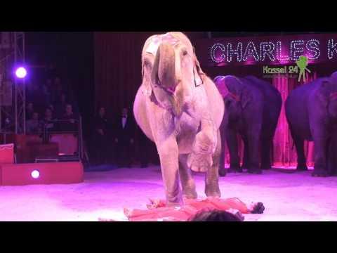 Video Zirkus Charles Knie in Kassel download in MP3, 3GP, MP4, WEBM, AVI, FLV January 2017