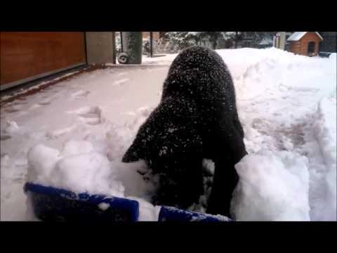 Lustige schwarze Katze spielen im Schnee