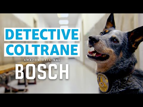 New Dog Detective Show From the Creator of Bosch | Prime Video