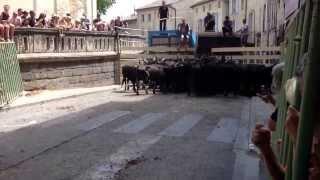 Uzes France  city photo : Bull run Uzes France