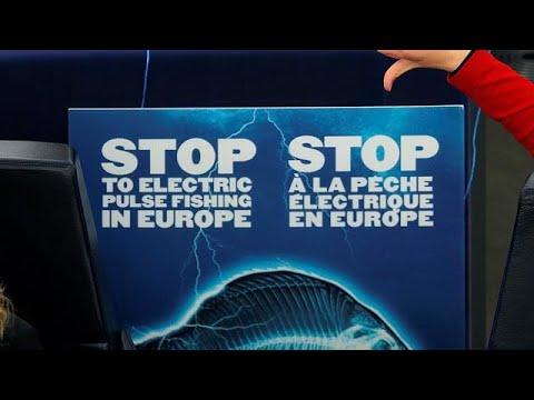Κατά της αλιείας με χρήση ηλεκτρικών παλμών το Ευρωπαϊκό Κοινοβούλιο…