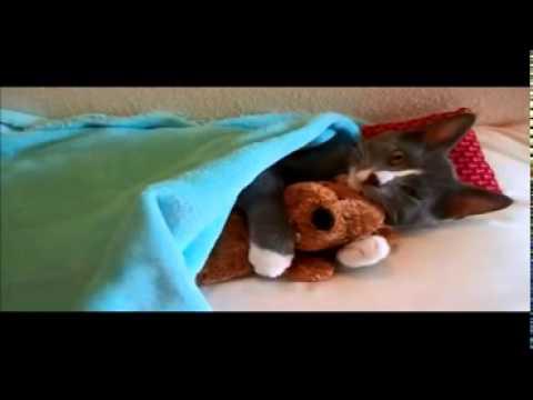 lustige Katzenvideos Katze schlft mit Teddy ein voll suess Videos von Katzen