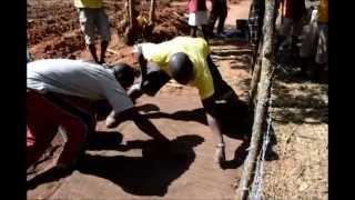 Guinea-Bissau, Tree Planting
