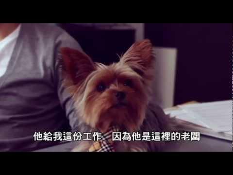 曾經愛是唯一,狗狗也會愛上人類的!!