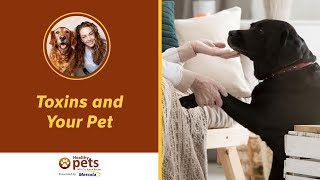 Toxins and Your Pet