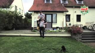 Jonas Wellens – clips vidéo